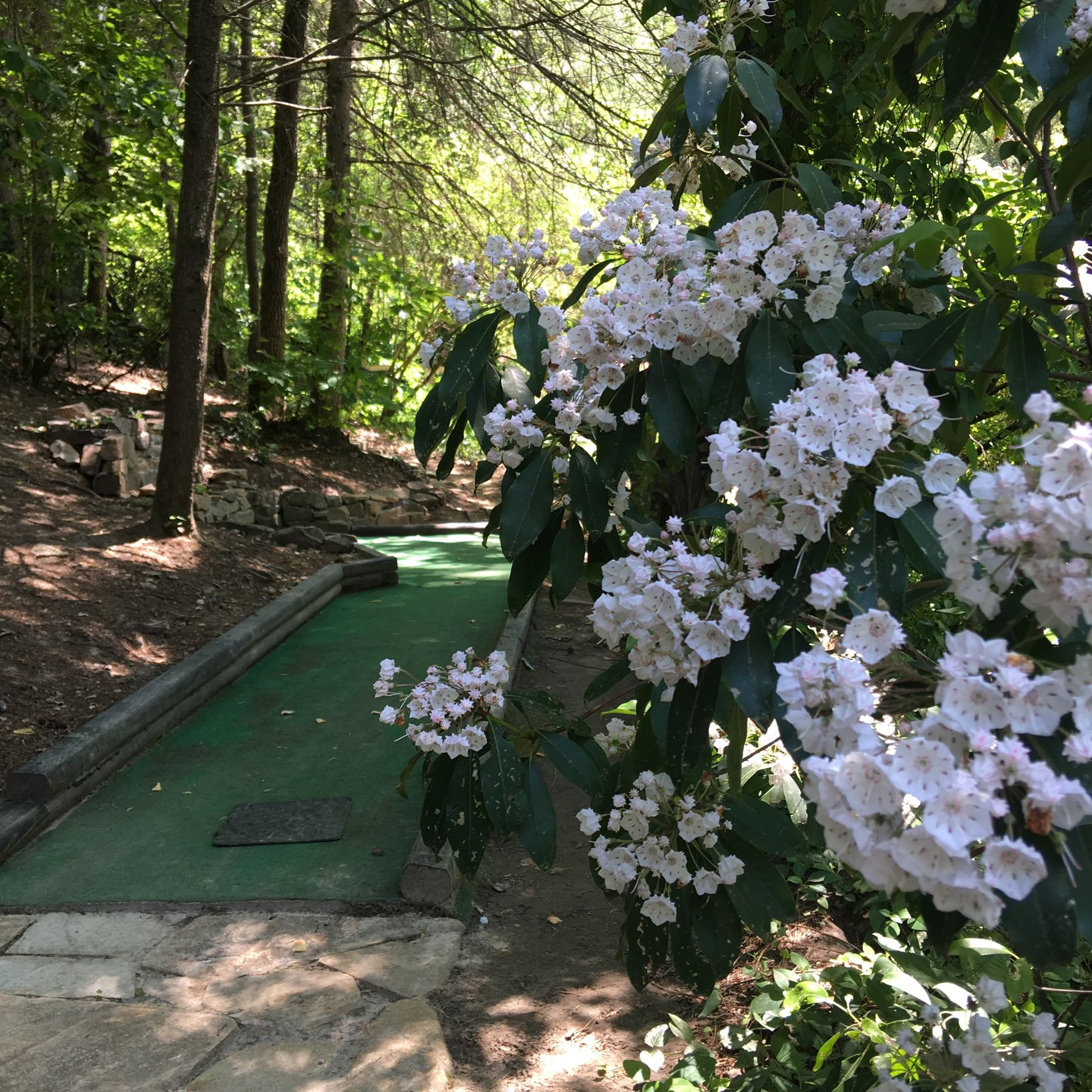 Mini Golf In Blue Ridge GA
